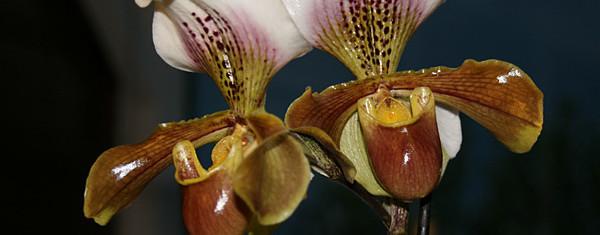 Le temps des orchidées